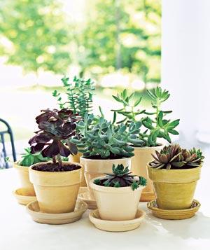 garden-centerpiece_300